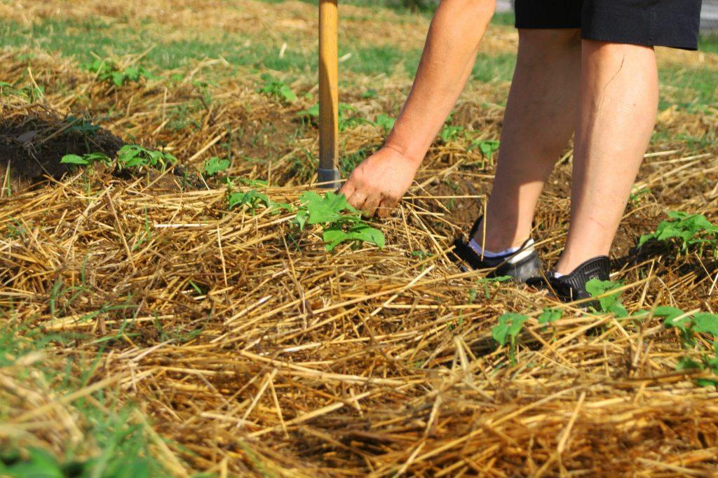 Как сделать из травы землю